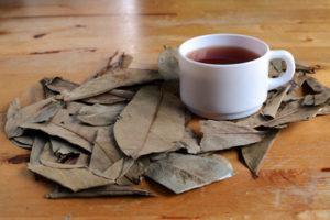 Graviola Tee in der Tasse