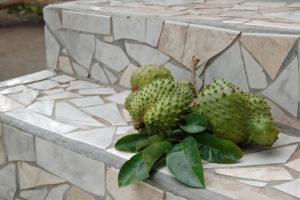 Sauersack Früchte haben Stacheln