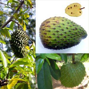 Sauersack Frucht